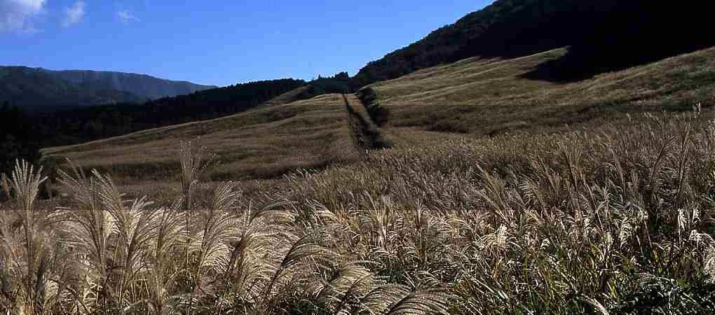 仙石原湿原03