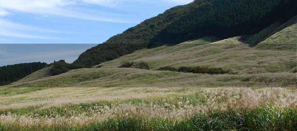 仙石原湿原04
