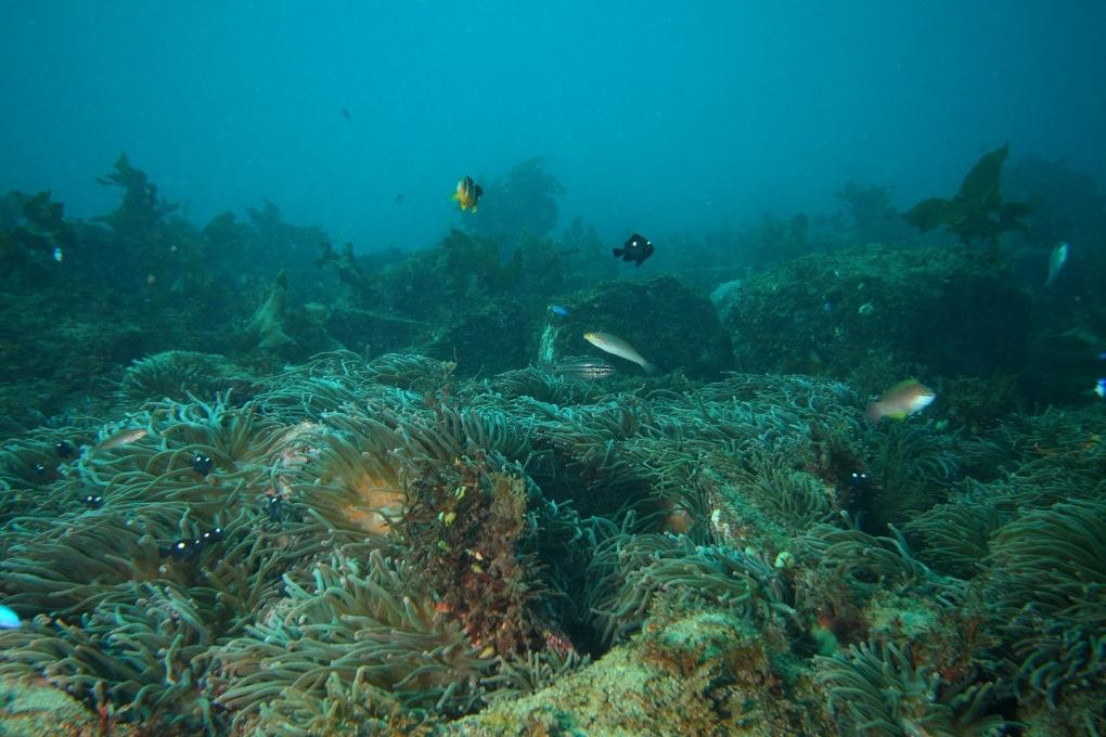 周辺で見られる海の生物
