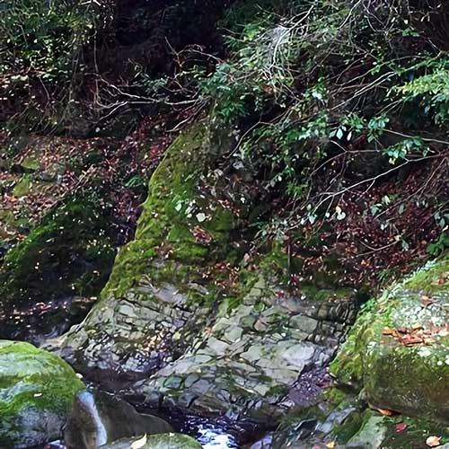 須雲川イメージ