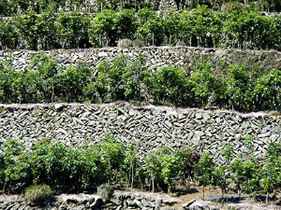 溶岩を使った石垣
