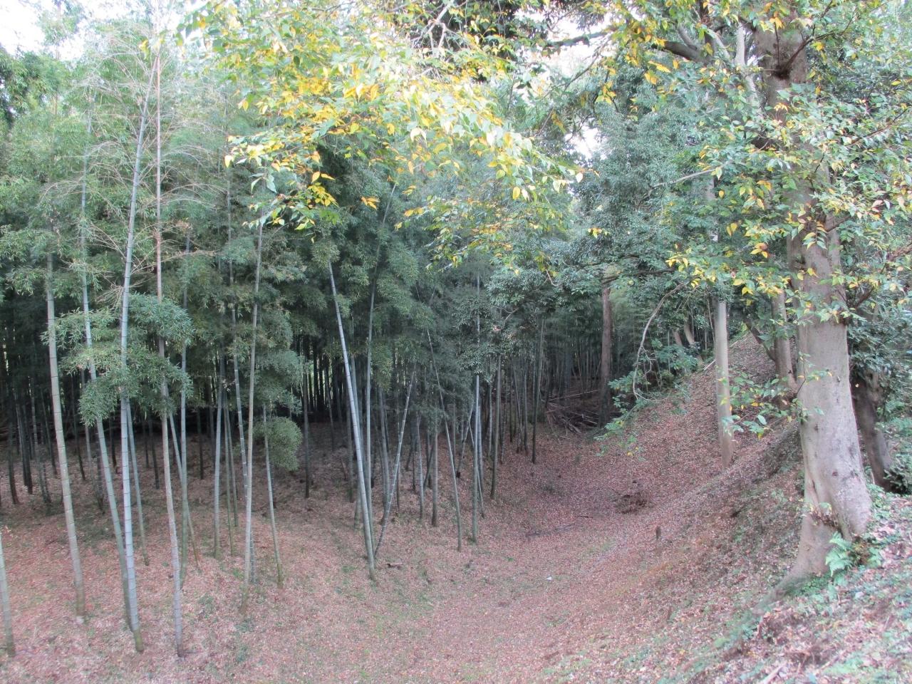 宮内 和子 氏「稲荷森の堀と自然」